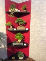 000.3 Bonsai Gruppe